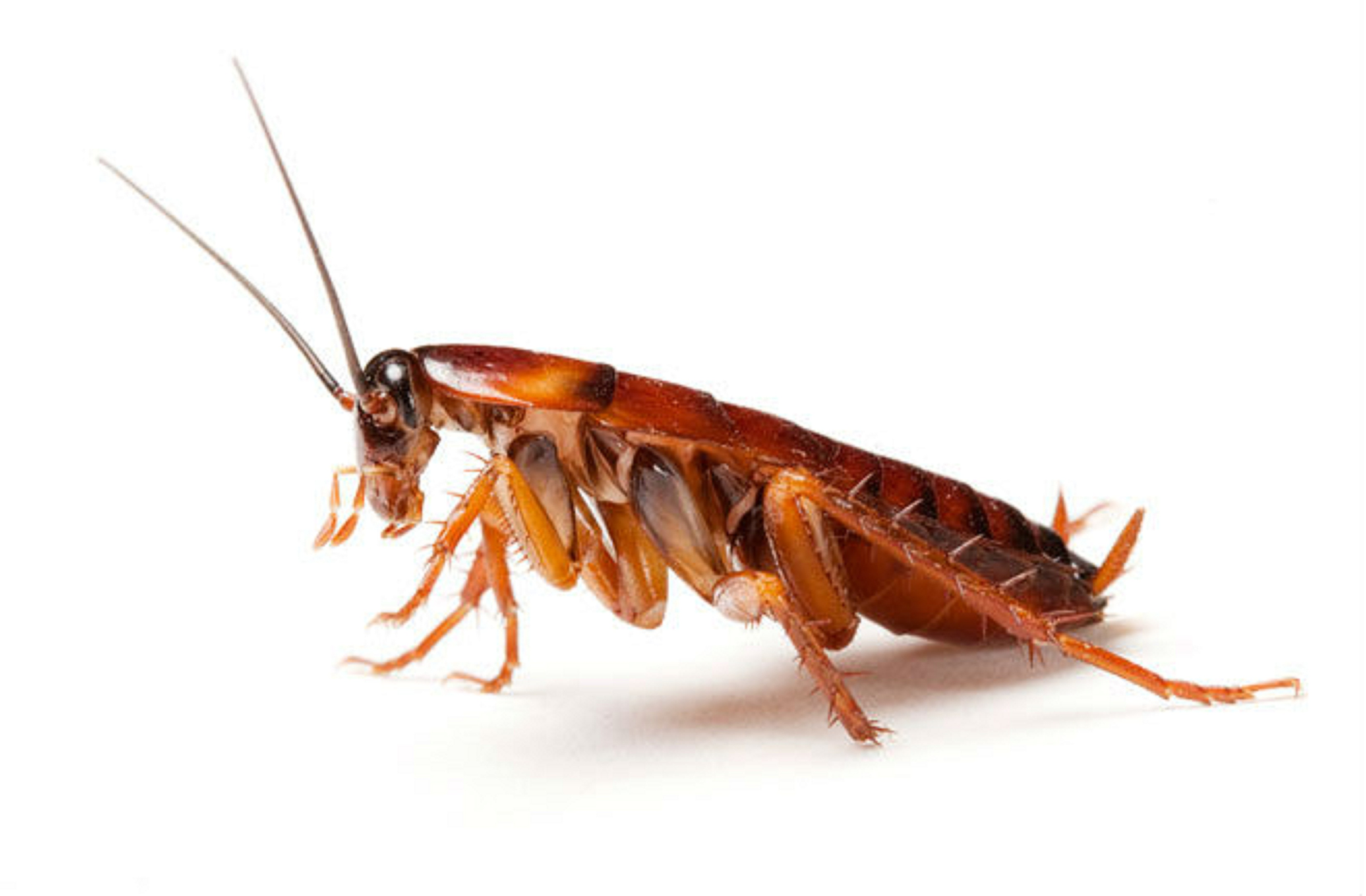 The cockroach discussion